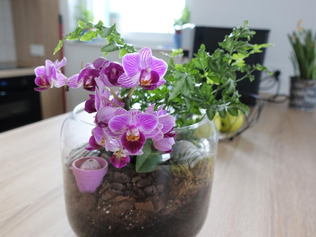kwiatek w słoiku